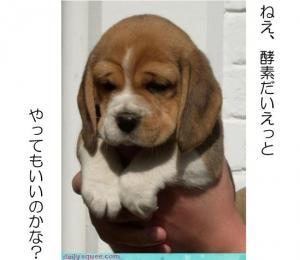 酵素ダイエット犬