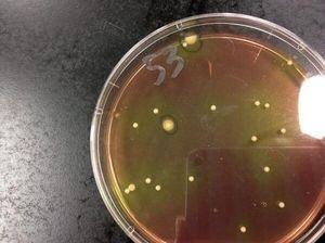 スズメ8さんが酵素ジュースで実験してみた
