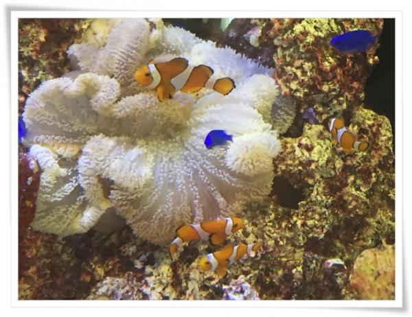 石垣新空港の水槽の魚